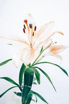 lilies von Michael Schulz-Dostal