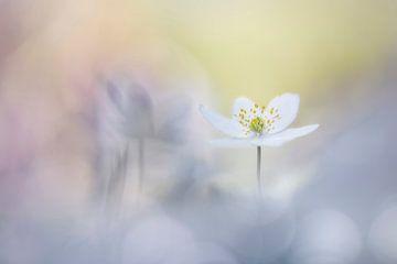 Freundliche Blumen von Bob Daalder