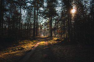Veluwe Sonnenaufgang von Frank van Eis