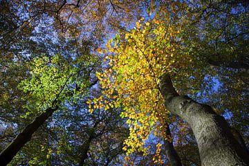 takken met gele en groene herfstbladeren aan beuken von anton havelaar