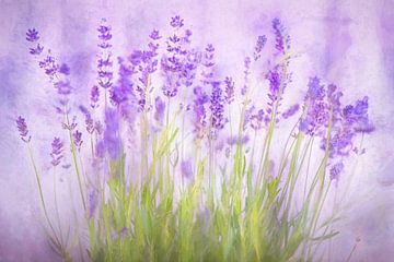 Lavendel in bloei van Arjen Roos