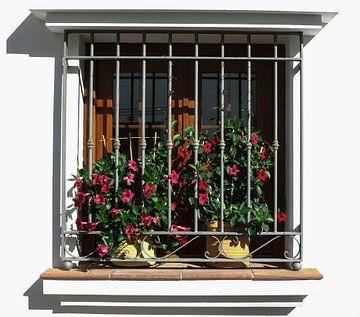 raam met planten van Frans Versteden
