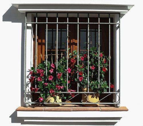 raam met planten