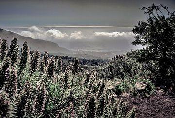 Natuur op TENERIFE    prachtige wildgroei zwart wit met bewolkte horizon von Willy Van de Wiele
