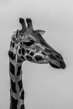Portret van giraf van Adri Vollenhouw