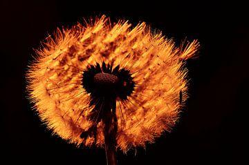 Tegenlicht van Paul Arentsen