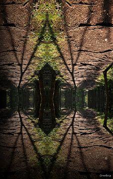 Spiegelend bos van CreaBrig Fotografie