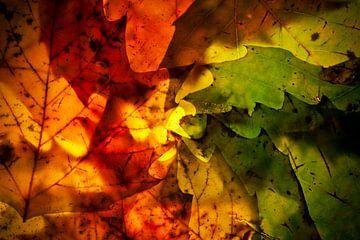 Herfstbladeren 8 van Henk Leijen