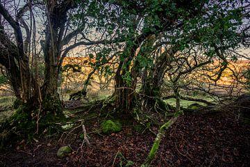 Mysteriöse Bäume in Irland von Bo Scheeringa Photography