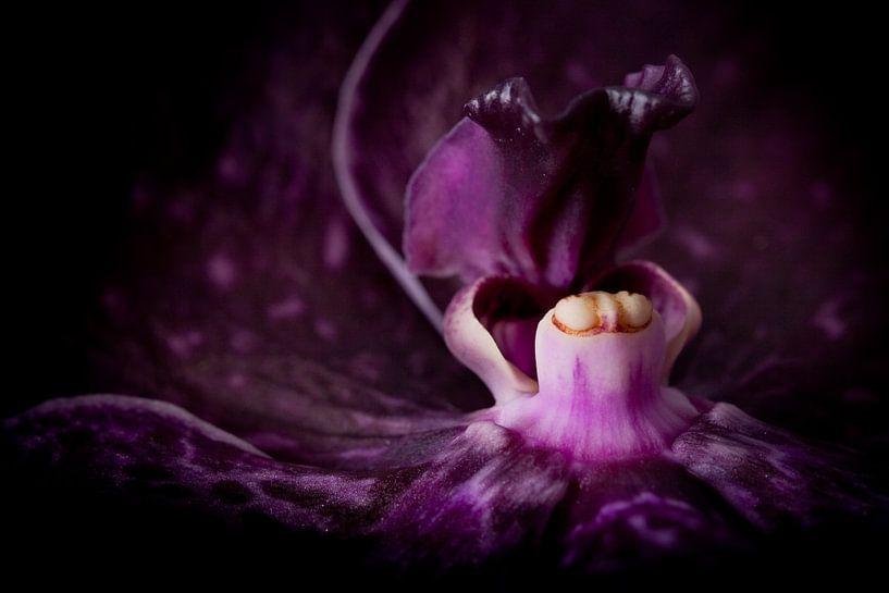 Closeup van een orchidee van Cynthia Hasenbos