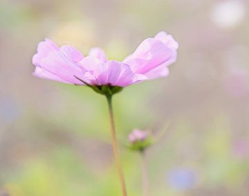 Délicate fleur rose sur