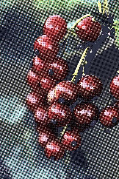 Rote Beeren van Rosi Lorz