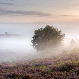 Fantastische mistige zonsopkomst Posbank van Sander Grefte