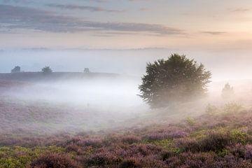 Belle lumière et brouillard sur le Posbank sur Sander Grefte
