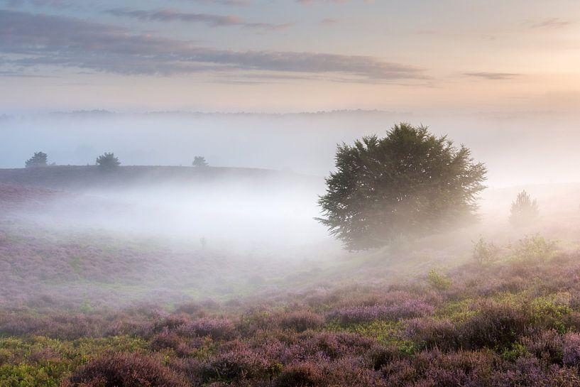 Ochtendlicht en mist over de heide van Sander Grefte