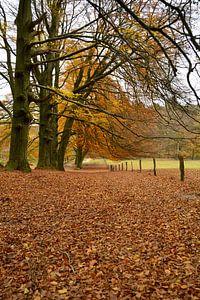 Veluws Bospad in de herfst