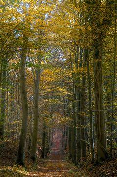 De gewurgde boom van Joris Pannemans - Loris Photography
