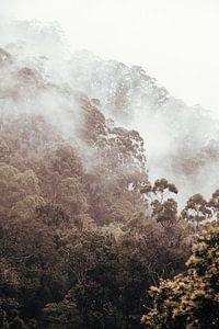 Mist tijdens de treinreis van Ella naar Kandy, Sri Lanka van
