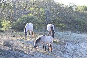 Wilde paarden van Amber van den Broek