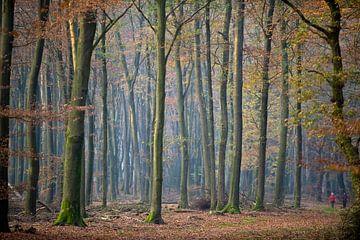 beukenbomen in Speulderbos van George Burggraaff