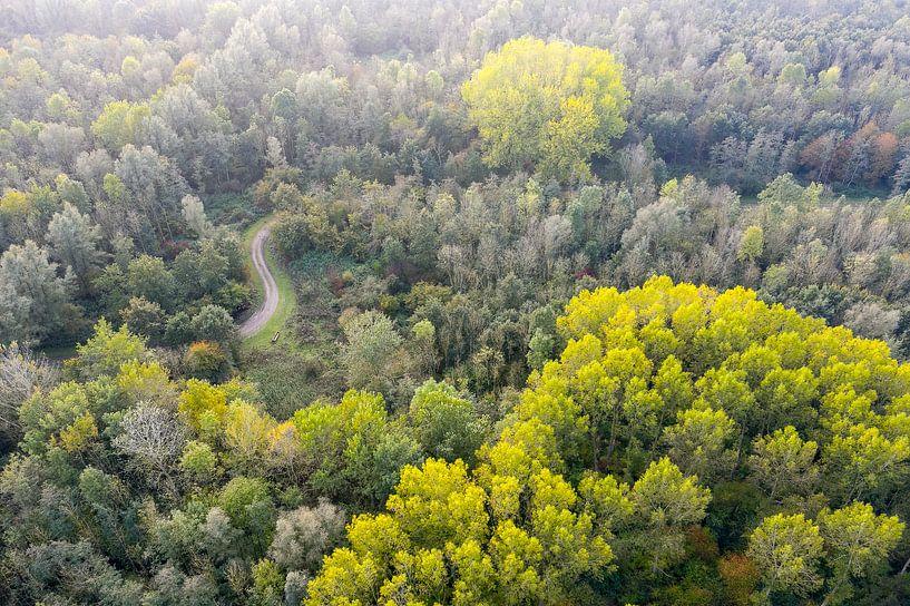 Loofbossen in Nederland van Jeroen Kleiberg