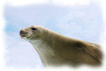 Antarktische Robbe von Maurice Dawson
