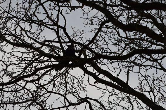 Vogel, Kraai, Kauw of Raaf in een kale boom tegen grijze lucht