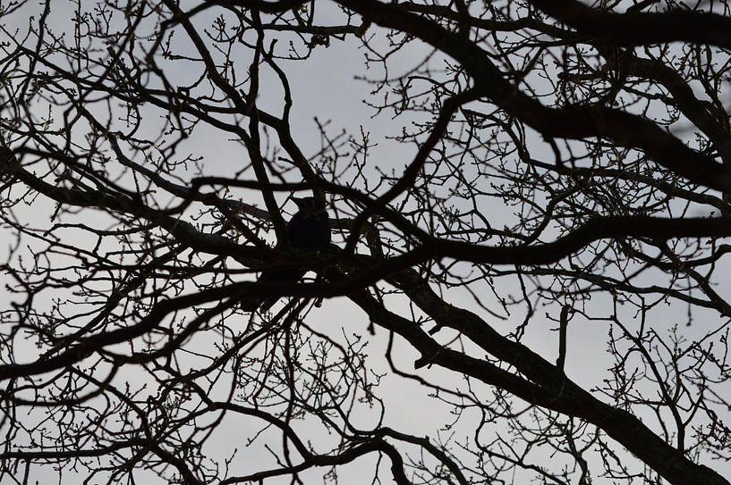 Vogel, Kraai, Kauw of Raaf in een kale boom tegen grijze lucht van Ronald H