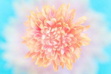 Makro einer Blume in sanften Pastelltönen von Lisette Rijkers