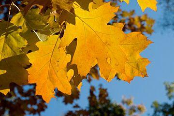 gelbes Herbstblatt von W J Kok