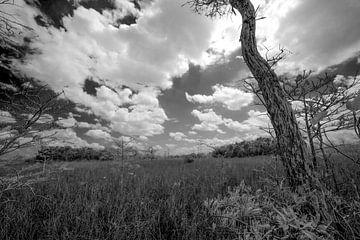 zwart en wit landschap Amerika 1 von Martin van der Sanden