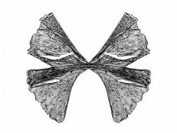 Butterfly van Cor Ritmeester