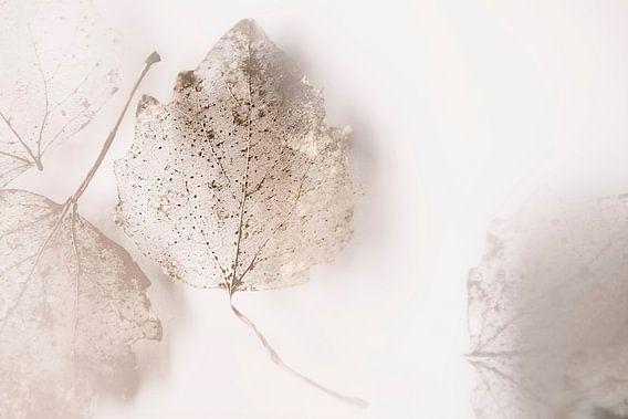Shadow of life van Ruud van Oeffelen-Brosens