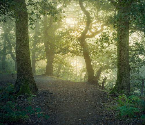 Am frühen Morgen auf dem Grebbeberg