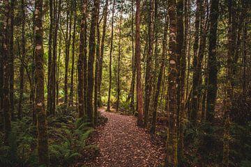 Sentier de randonnée en Tasmanie sur Eveline Dekkers