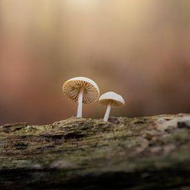 Die Perlen des Herbstes von GoWildGoNaturepictures