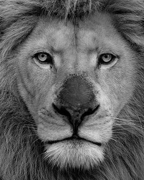 Portrait du roi lion blanc en noir et blanc sur Patrick van Bakkum