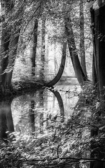 De oelerbeek van Martijn van Steenbergen