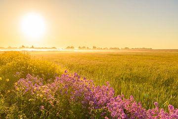Frühmorgens Sonnenaufgang während eines schönen Frühlingstages über dem Zwartendijk von Sjoerd van der Wal