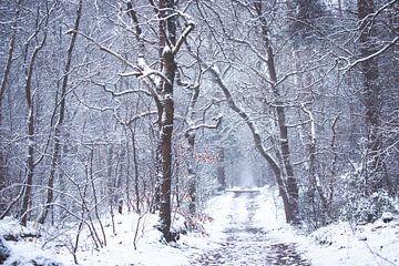 L'hiver 2021 dans le Zeisterbos sur Peter Haastrecht, van