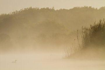 Fuut in mist duinmeer van Menno van Duijn