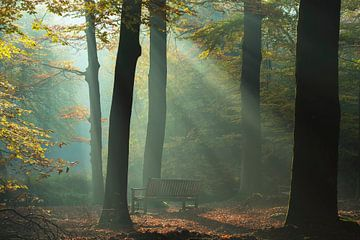 Die Bank im Wald von Francis Dost