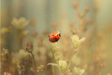 Ladybug  von Selma Hamzic