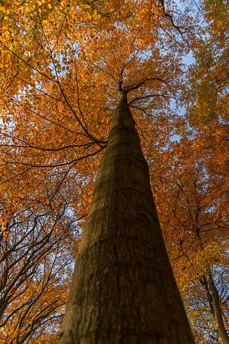 grote boom in de herfst.