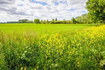 Bunter Bergrand aus nächster Nähe mit frischen Wildpflanzen von Ruud Morijn