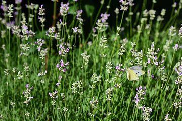 een gele vlinder tussen lavendelbloemen van Ulrike Leone