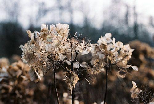 Winter in het Kralingse Bos van