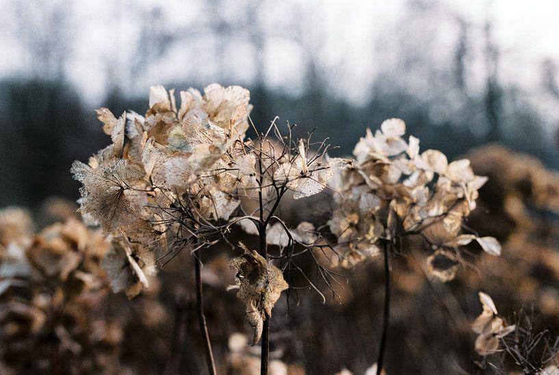 Winter in het Kralingse Bos van Pieter Wolthoorn