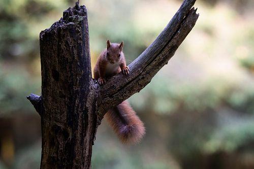 nieuwsgierige eekhoorn
