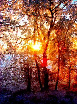 Un soleil d'hiver romantique sur McRoa